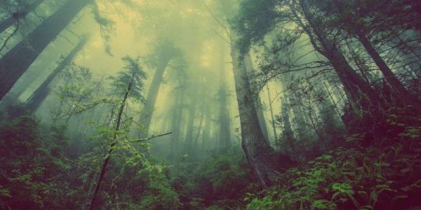 Cum putem salva natura