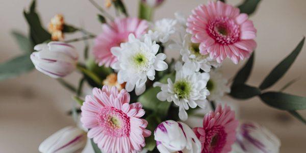 Florile in mediul interior - II