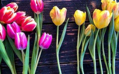 Florile si starea de spirit in casa - I